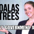 Honest Government Ad – Koalas & Trees